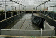Photograph of concrete fish tanks