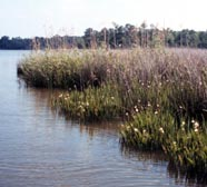 Image of brackish estuary
