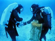 Image of 2 divers