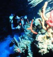 Image of scientist standing in a reef sand channel