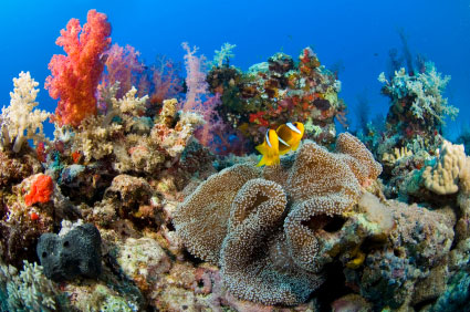 Oil in coral reef could be
