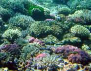Photograph of a coral reef