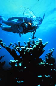 Diver with elkhorn and staghorn corals