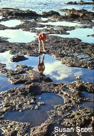 Image of tidal pools