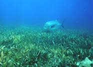 Image of seagrass bed
