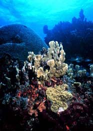 Image of a healthy reef