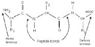 Graphic of polypeptide
