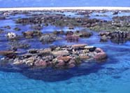 Image of reef lagoon and back reef zone
