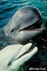 Image of two dolphin species