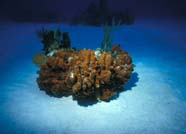 Image of sand flat with patch reef