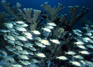 Image of school of reef fish
