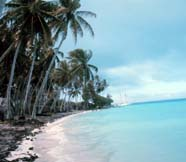 Image of tropical shoreline