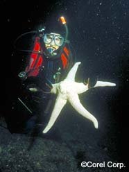Image of diver holding starfish