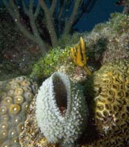 Image of sponge with coral
