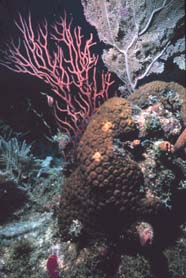 Image of various hard and soft corals