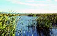 Image of wetland